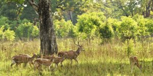 Bardiya National Park best winter destination